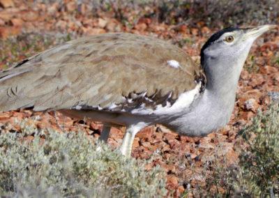 Photo Gallery: Wildlife & Flora